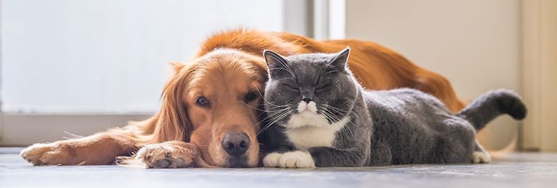 COVID-19 Dogs, Cats and Pets By-laws Written by Strata Lawyers