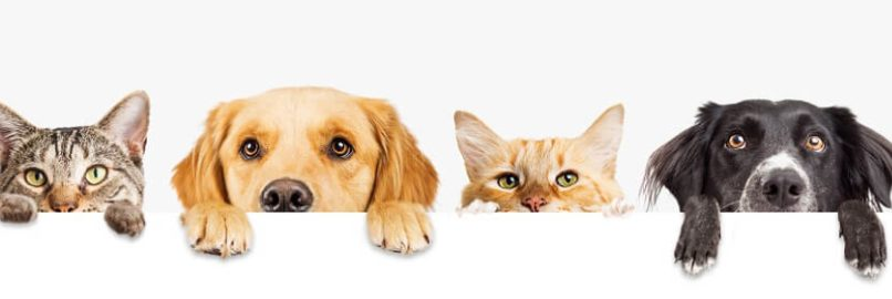 Pet By-laws in Strata Living