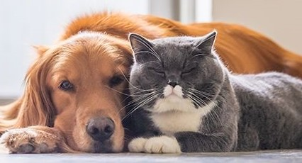 Dog.Cat.Pet.By.laws_ JS Mueller & Co Strata Lawyers