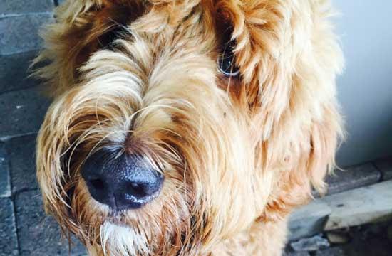 Strata Living Pet Bonds JS Mueller & Co Lawyers