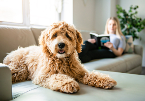 Pets and Dogs in Strata Living Apartments