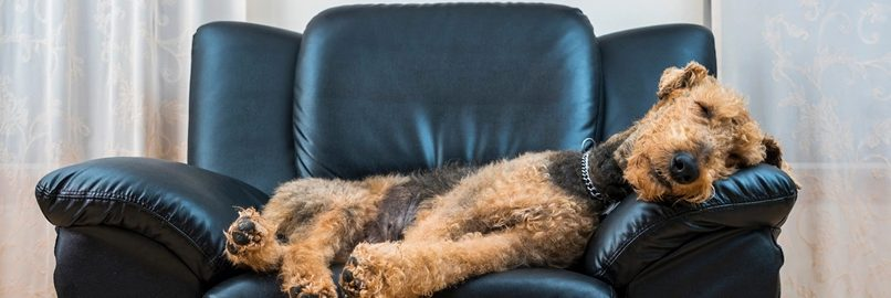 Pets in Strata the New Laws and Pitfalls